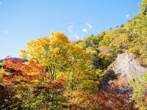 大雪山系の紅葉