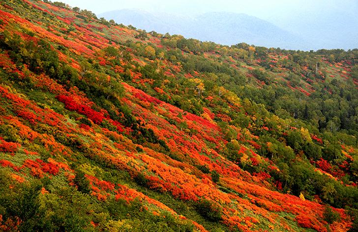 山の斜面が色鮮やかに染まる秋の層雲峡、銀泉台