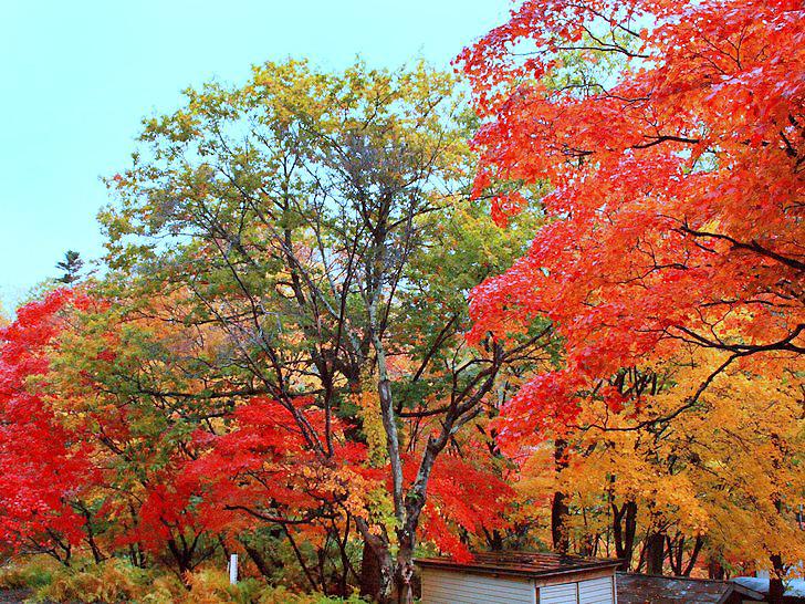 層雲峡温泉街から気軽に歩ける紅葉の散策路、紅葉谷